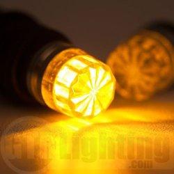 front park bulbs.jpg
